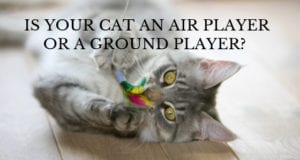 is your cat an air player or a ground player