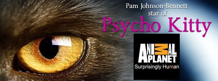 Pam Johnson-Bennett star of Psycho Kitty on Animal Planet