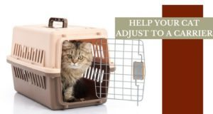 HELP YOUR CAT ADJUST TO A CARRIER