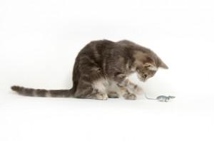environmental enrichment for cats