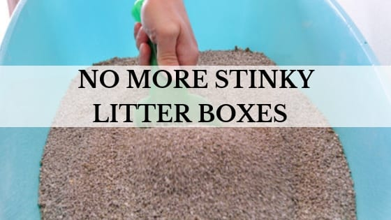 no more stinky litter boxes