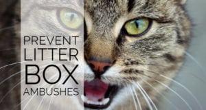 prevent litter box ambushes