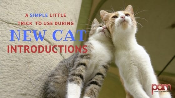 a simple little trick to use during new cat introductions