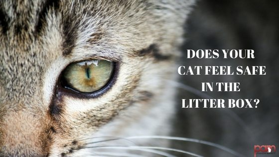 does your cat feel safe in the litter box?