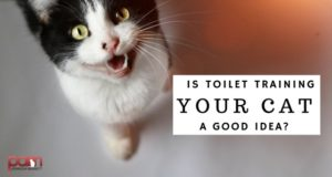 is toilet training your cat a good idea?