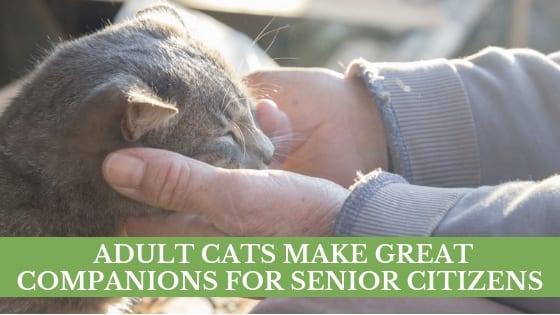 adult cats make great companions for senior citizens