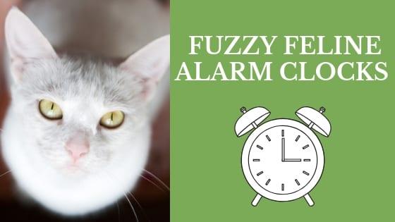 fuzzy feline alarm clocks
