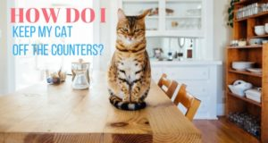 how do i keep my cat off the counters?