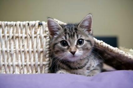 tidy cats breeze litter box