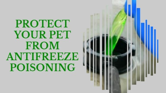 protect your pet from antifreeze poisoning