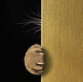 pata de gato