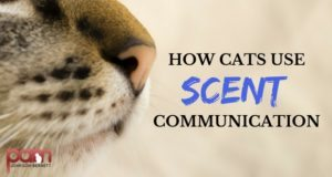how cats use scent communication