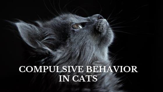 compulsive behavior in cats