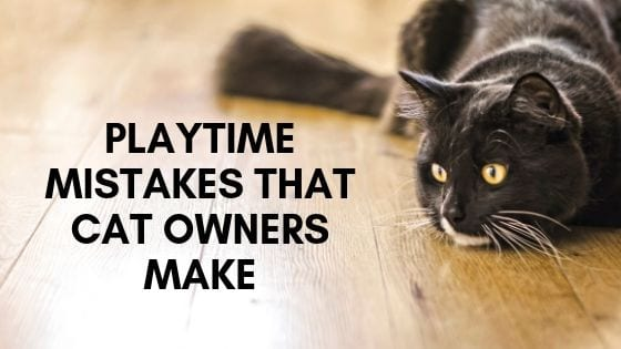 playtime mistakes that cat owners make