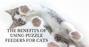 the benefits of using puzzle feeders for cats