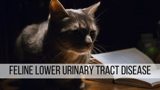 feline lower urinary tract disease