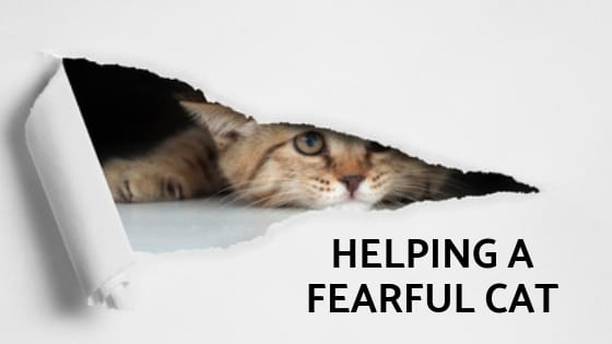 helping a fearful cat