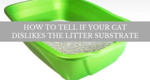 how to tell if your cat dislikes the litter substrate