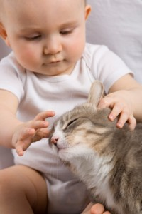 prepare cat for new baby