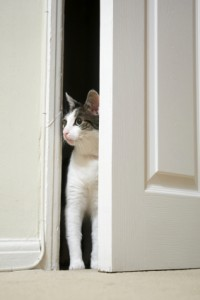 fear in cats