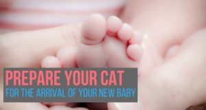 prepare your cat for the arrival of your new baby