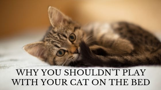 why you shouldn't play with your cat on the bed