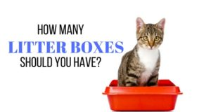how many litter boxes should you have