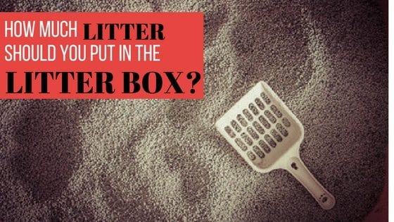 how much litter should you put in the litter box
