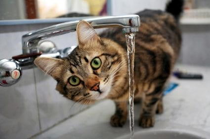 Cats Water Separate From Food