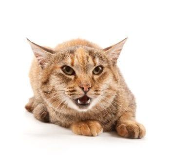 Cat Doesn T Scratch
