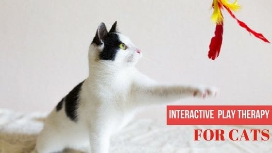 interactive play therapy for cats