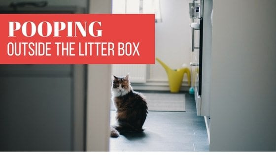 pooping outside the litter box