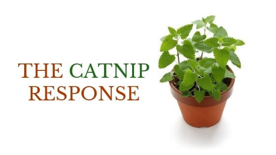 the catnip response