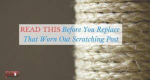 read this before you replace that worn out scratching post