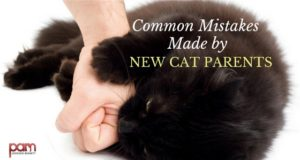 COMMON MISTAKES MADE BY NEW CAT PARENTS