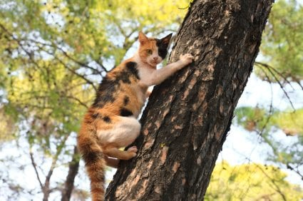 cat going up a tree