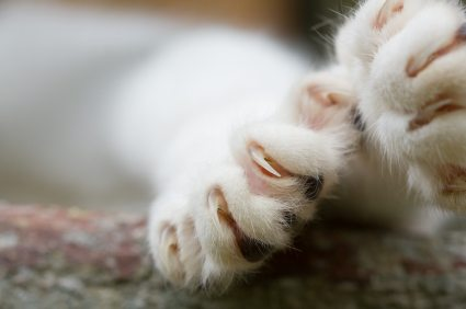 trimming a cat's claws