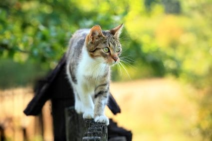 Cat S Head On Cat S Flank