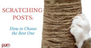 scratching posts: how to choose the best one