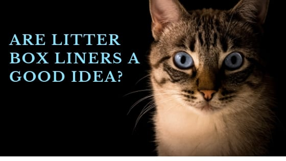 litter box liners pros and cons convenient or problematic