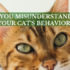 are you misunderstanding your cat's behavior