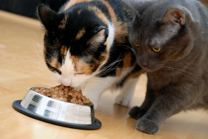 cats eating at food bowl