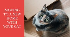 moving to a new home with your cat