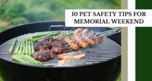 10 pet safety tips for memorial weekend