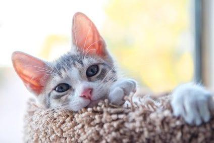 kitten on cat perch