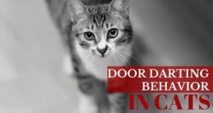 door darting behavior in cats
