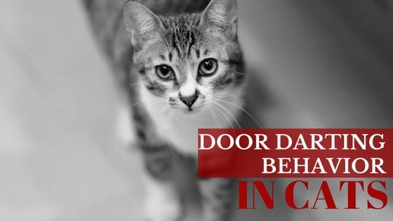 & Cat Behavior | Door Darting : What to Do?