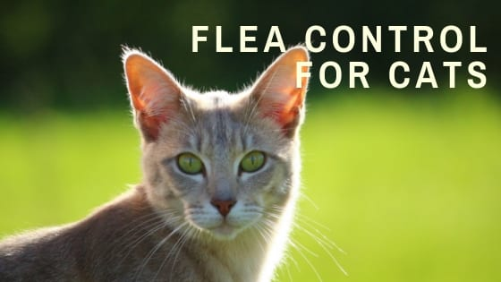 Cat Health | Flea Control: How to Identify and Treat