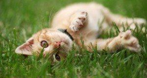 kitten rolling in grass