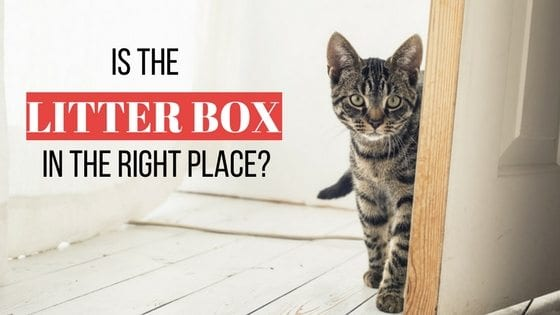 is the litter box in the right place